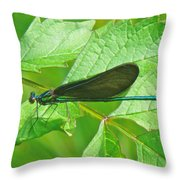 Ebony Jewelwing Damselfly - Calopteryx Maculata Throw Pillow