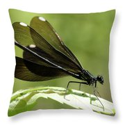 Ebony Jewelwing Fluttering For Male Throw Pillow