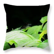 Ebony Jewelwing Male Throw Pillow