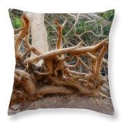 Eccentric Tree Root Growing In Ein Gedi Throw Pillow