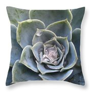 Echeveria With Water Drops Throw Pillow