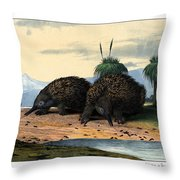 Echidna Or Porcupine Anteater Throw Pillow