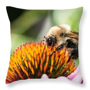 Echinacea Delight Throw Pillow