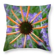 Echinacea Mango Throw Pillow