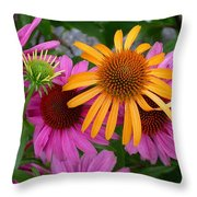 Echinacea Mango Meadowbrite Throw Pillow