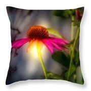 Echinacea Sunrise Throw Pillow