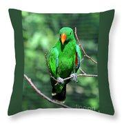 Eclectus Parrot-1 Throw Pillow