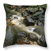 Edmond Forest Reserve On Saint Lucia Throw Pillow