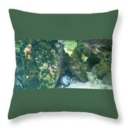 Eel Waiting To Snatch Something For Lunch Throw Pillow