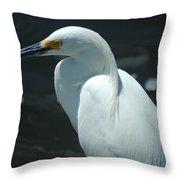 Egret Of Sanibel 6 Throw Pillow