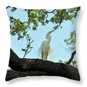 Egret Waiting For Mating  Throw Pillow