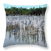 149838-egrets Feeding, Everglades Nat Park  Throw Pillow