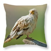 Egyptian Vulture Throw Pillow
