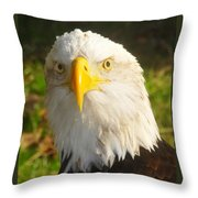 Bald Eagle Head Shot Two Throw Pillow