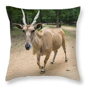 Eland Antelope Out In The Open Throw Pillow