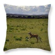 Eland Calf   #7195 Throw Pillow