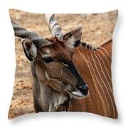 Eland Throw Pillow