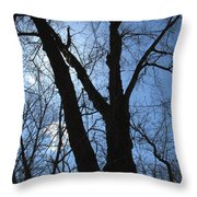 Elder Maple Silhouette Throw Pillow