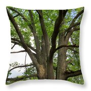 Elder Oak Throw Pillow
