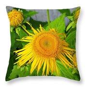 Elecampane Daisies Throw Pillow