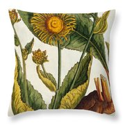 Elecampane Throw Pillow by Elizabeth Blackwell