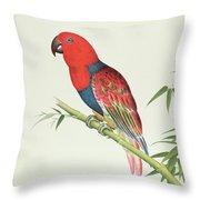 Electus Parrot On A Bamboo Shoot Throw Pillow