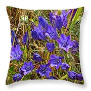Elegant Brodiaea In Tilden Regional Park-california   Throw Pillow