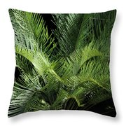 Elegantly Curved Throw Pillow