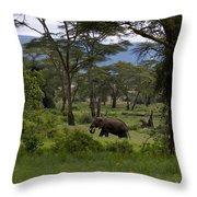 Elephant   #0068 Throw Pillow