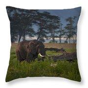 Elephant   #0134 Throw Pillow