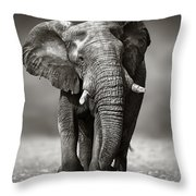 Elephant Approach From The Front Throw Pillow