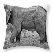 Elephant Bull In Black And White Throw Pillow