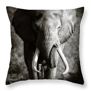 Elephant Bull Throw Pillow by Johan Swanepoel