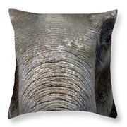 Elephant Close Up 1 Throw Pillow