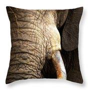 Elephant Close-up Portrait Throw Pillow by Johan Swanepoel
