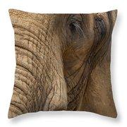 Elephant Close Up Throw Pillow
