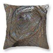 Elephant Eye Chiang Mai, Thailand Throw Pillow