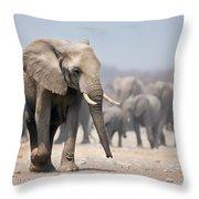 Elephant Feet Throw Pillow