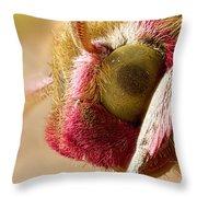 Elephant Hawk Moth Extreme Macro Throw Pillow