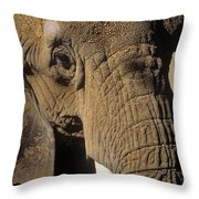 Elephant Portraint Throw Pillow