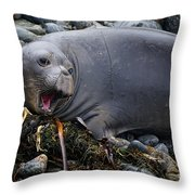 Elephant Seal Of Ano Nuevo State Reserve Throw Pillow