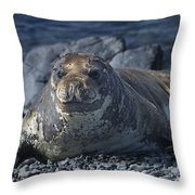 Elephant Seal Pup... Throw Pillow