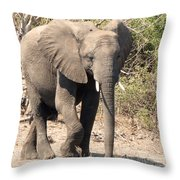 Elephant Stroll Throw Pillow