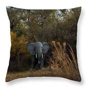 Elephant Trail Throw Pillow