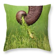 Elephant Trunk Pulling Grass Throw Pillow