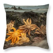 Eleven-armed Sea Stars At Low Tide Throw Pillow