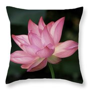 Elizabeth Throw Pillow by Cindy Lark Hartman