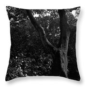 Elizabethan Gardens Tree In B And W Throw Pillow