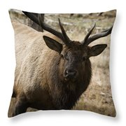 Elk-animals-image Throw Pillow