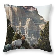 Elk At Cathedral Rock Throw Pillow